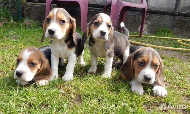 Собаки и щенки в екатеринбурге даром фото и цены e1