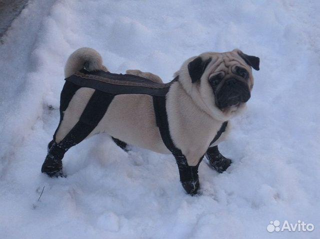 Пошив обуви для собаки на заказ. От суровых зимних морозов, реагентов, осе