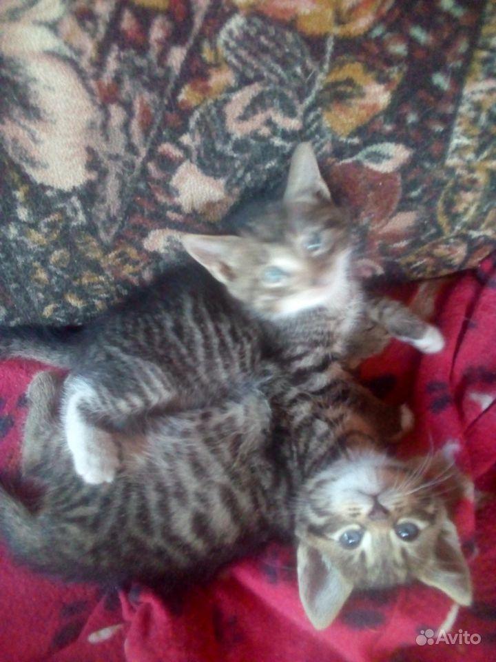 Котенок на счастье в Орле - фотография № 2