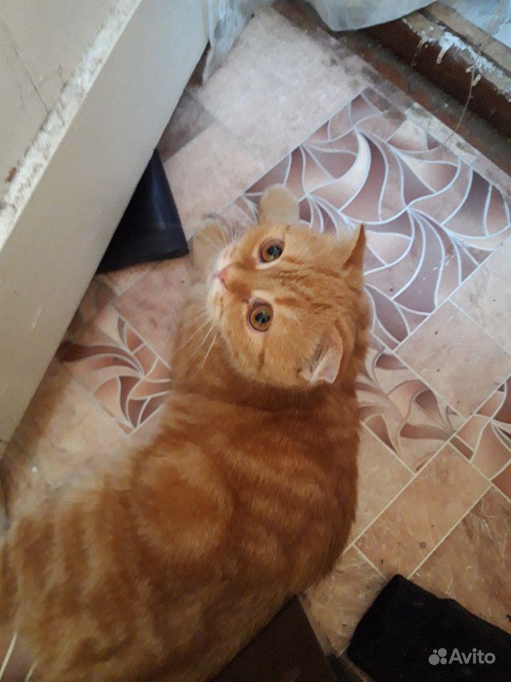 Кошка Даша