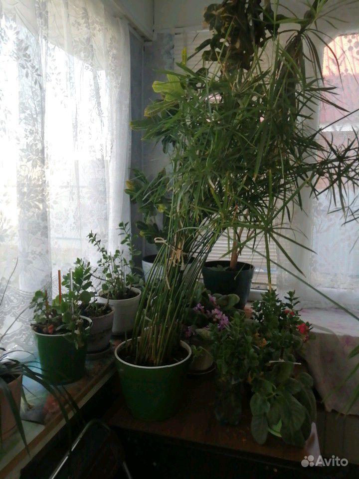 Цветы комнатные купить на Зозу.ру - фотография № 8