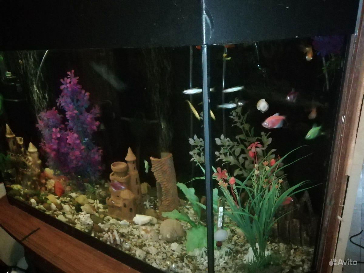 Аквариум с рыбами купить на Зозу.ру - фотография № 3