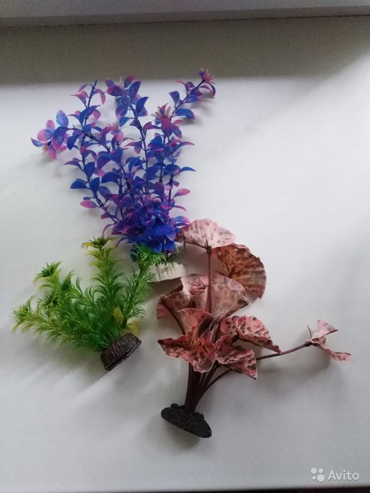 Растения в аквариум купить на Зозу.ру - фотография № 1