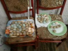 Инкубационное яйцо фазана