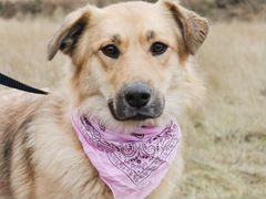 Собака Лиза для семьи и дома в дар