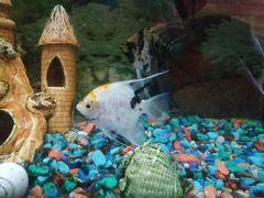 Рыбы для аквариума
