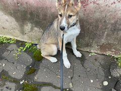 Потерявшийся щенок ищет хозяев