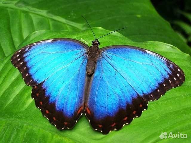 Бабочка подарок самара