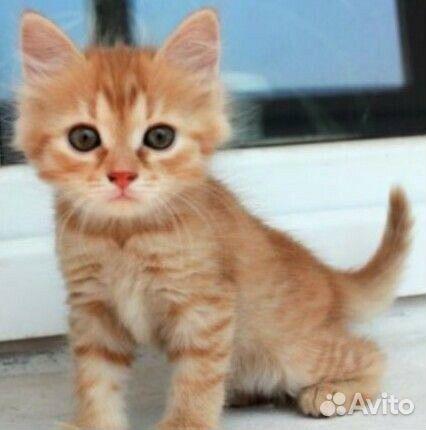 фото рыжие котята