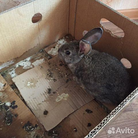 девочки имеют продажа кроликов в новосибирске на авито носочки шоколадная