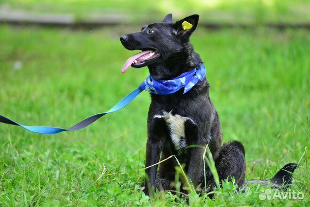 Замечательная собака ищет семью 89128862013 купить 4