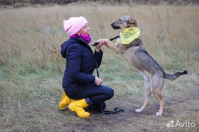 Пёс Смайлик в добрые руки купить на Зозу.ру - фотография № 4