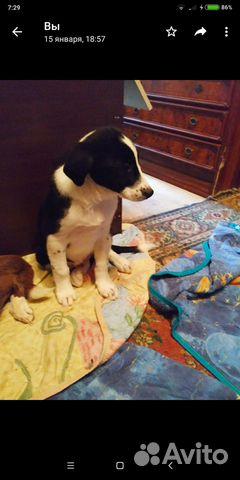 Отдам щенков купить на Зозу.ру - фотография № 2