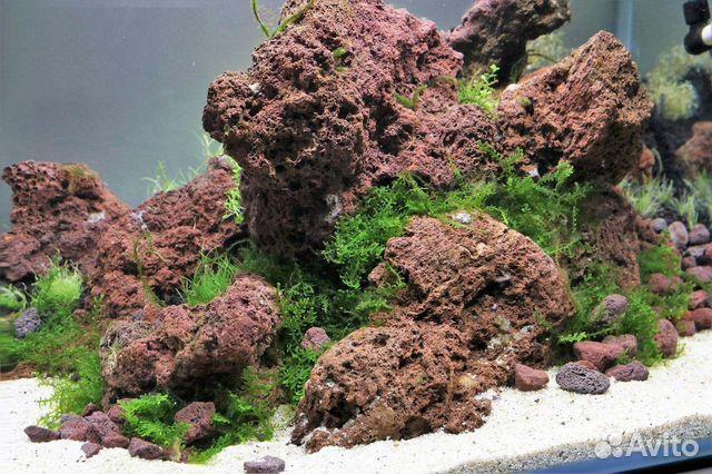 Вулканическая Лава камни 1 - 5 кг для аквариума 89504050813 купить 4