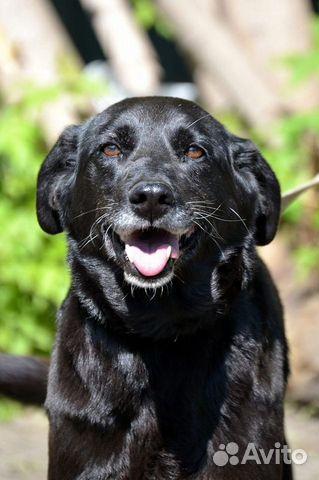 Собака Луша ищет хозяина. Отдадим в хорошие руки 89133875509 купить 5