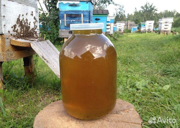 Продам мед горный  89609684216 купить 1