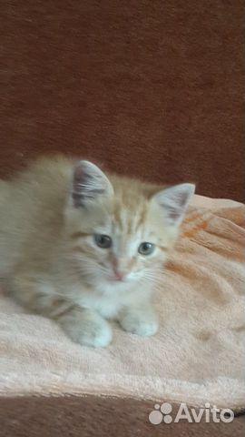Котенок (мальчик)  89625017534 купить 2