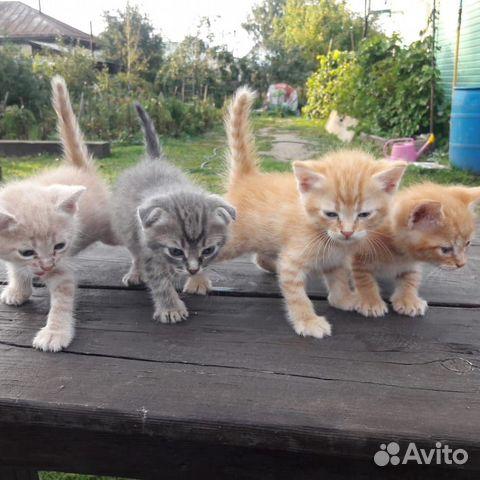 Кошка  89619978406 купить 1