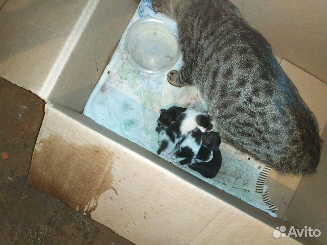 Кошка и 5-еро котят  89638099482 купить 7