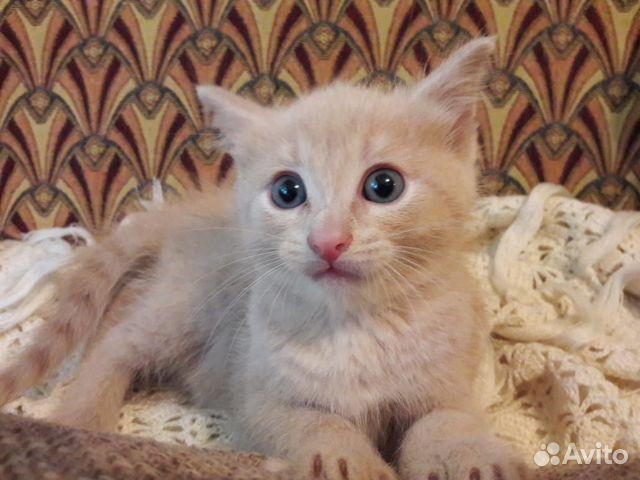 Кошка  89174311719 купить 2