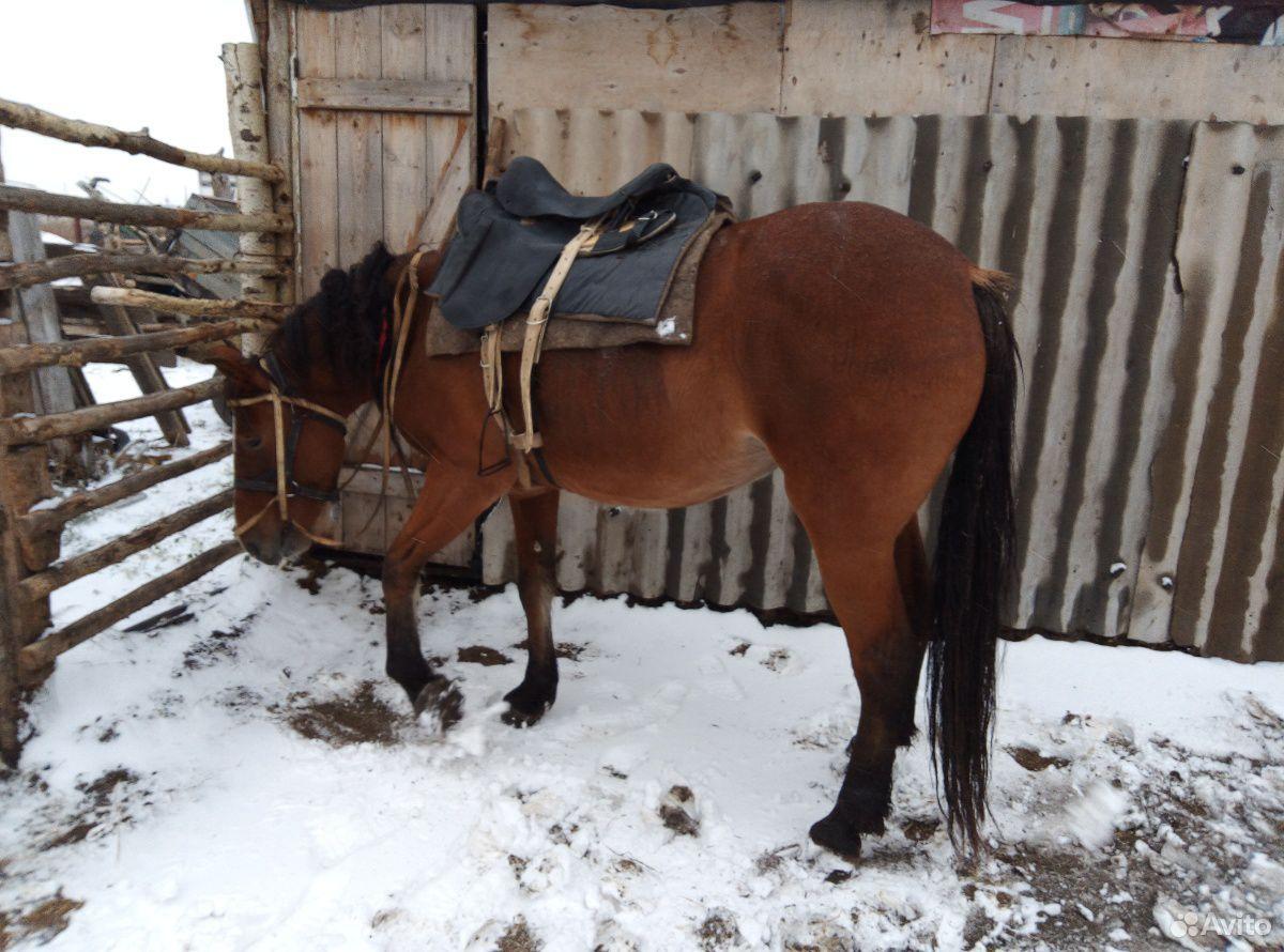 Лошадь  89236928993 купить 3