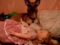 В добрые руки собаку