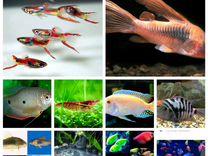 Аквариумная рыба-поступление