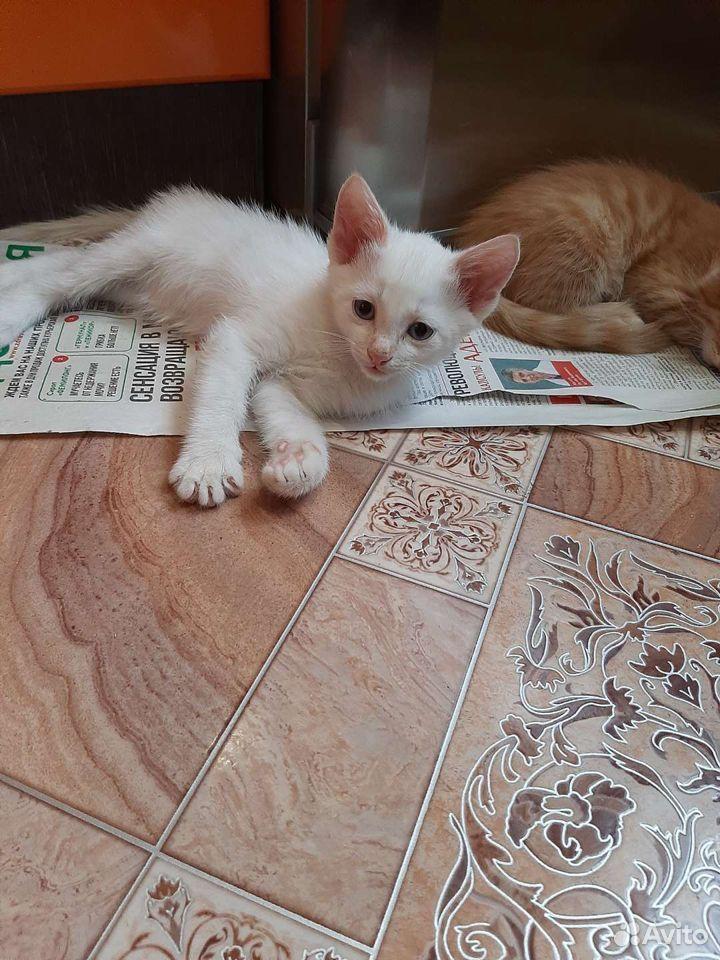 Кошка 89620780609 купить 1