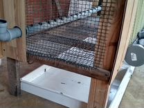 Клетка для цыплят и бройлеров