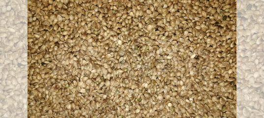Семена конопли спб с доставкой купить марихуану киеве