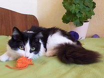 Лизавета. 5 мес. Стерилизованна — Кошки в Геленджике