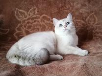 Позолоченный Кот
