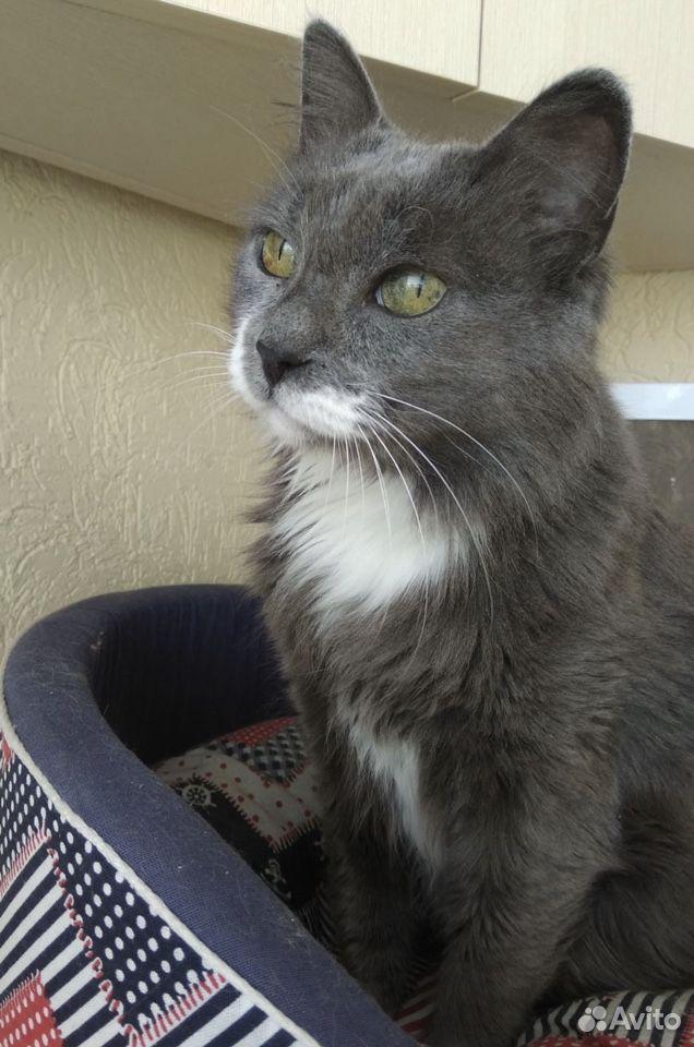 Алиса, Молодая кошка в добрые руки бесплатно  89093330558 купить 2