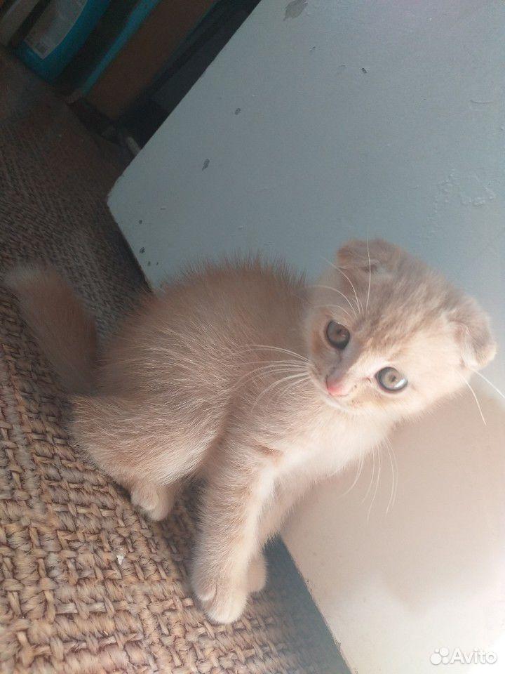 Продаю котят  89228220557 купить 7